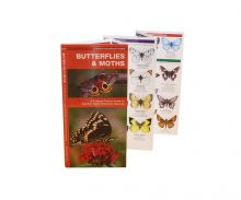 A Pocket Naturalist Guide - Butterflies and Moths