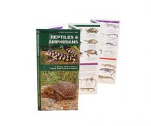 A Pocket Naturalist Guide - Reptiles and Amphibians