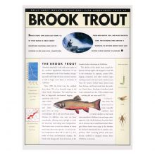 Brook Trout Folio