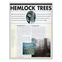 Hemlock Trees Management Folio