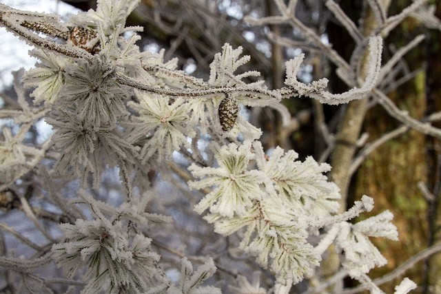 Winter frost photo