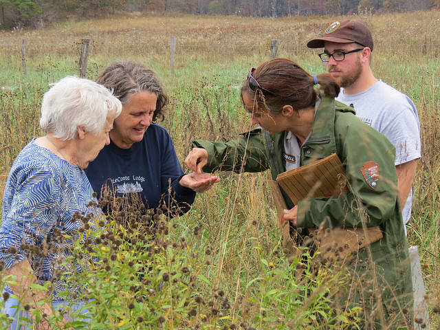 Ranger assists in gathering native seeds