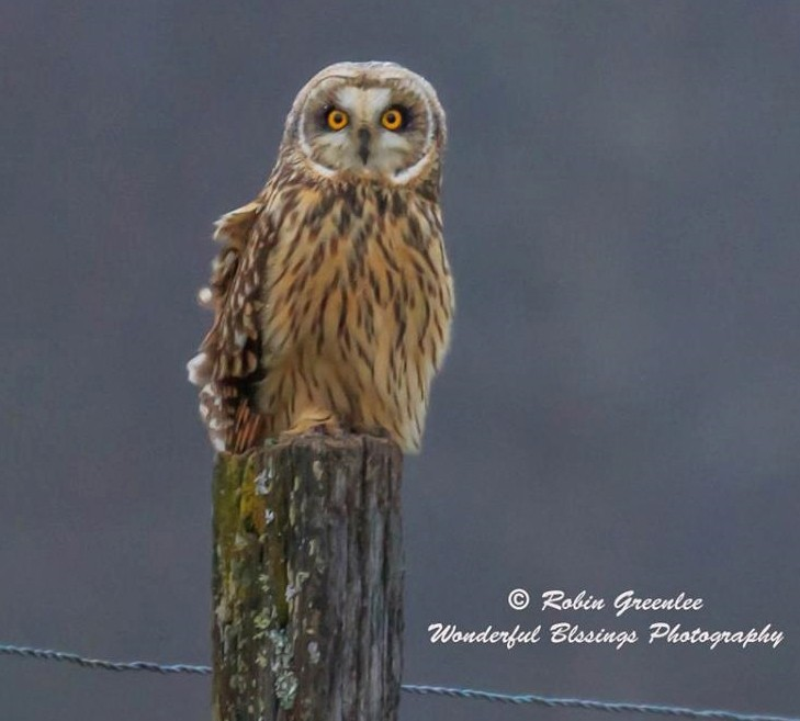 Owl on post Photo by Robin Greenlee