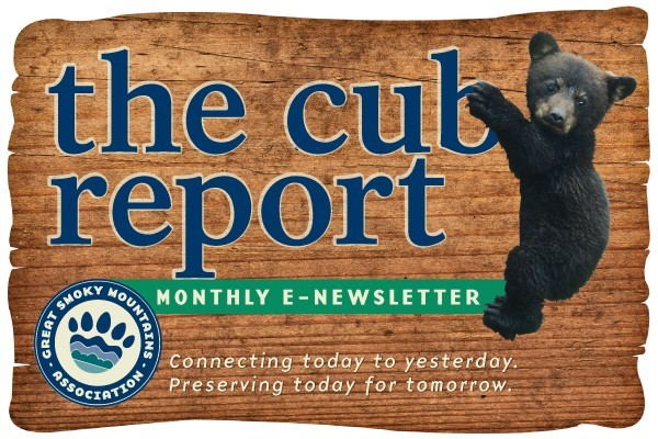 Cub Report Banner Image