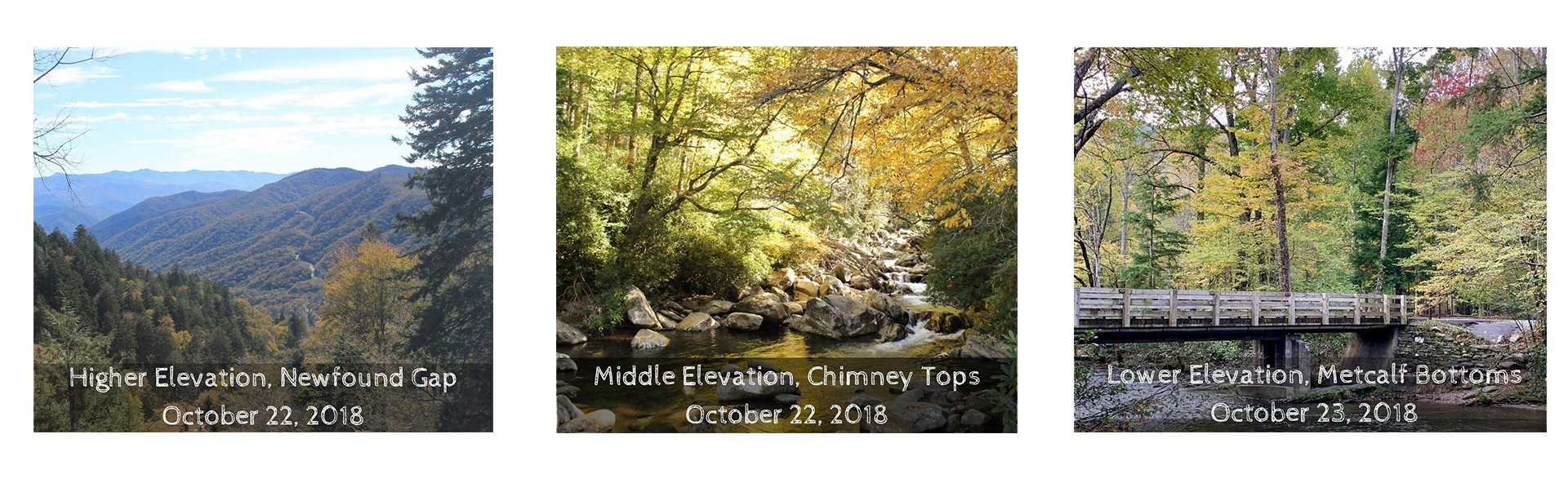 Smokies Fall Foliage