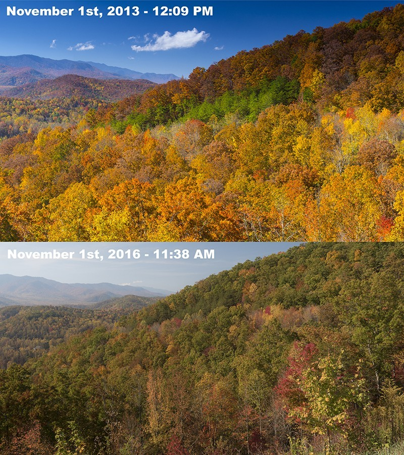 Fall Color in Great Smoky Mountains National Park