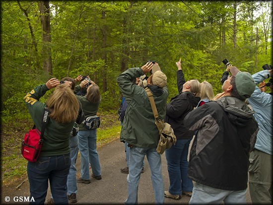 Group bird watching